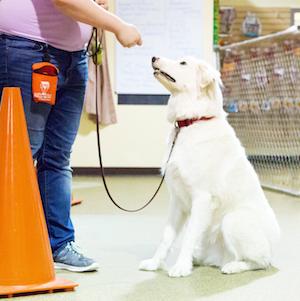 Fur-Get Me Not Dog Daycare, Boarding, Dog Training, Dog